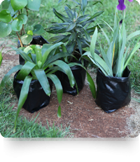 A-One Recycled Plastics: Plantation / Seedling Bags