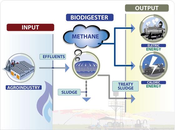 Biogas Plants -  Biodigesters