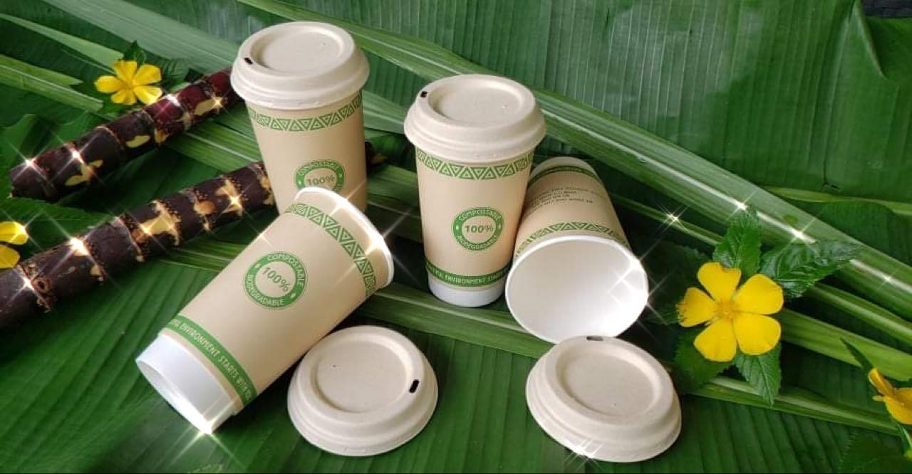 Biogradable Coffee Cups