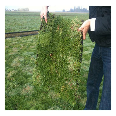 Ecomerchant Instant Green Roof - Flexible Tiles