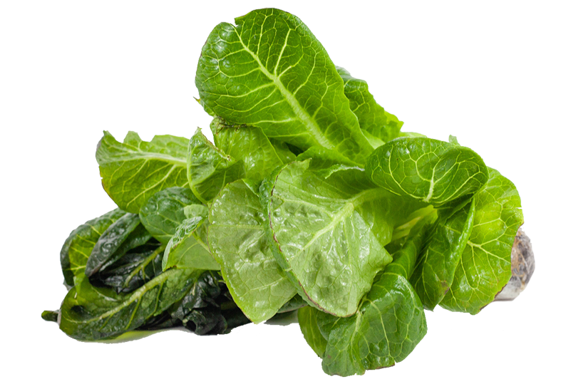 Green Cos Lettuce