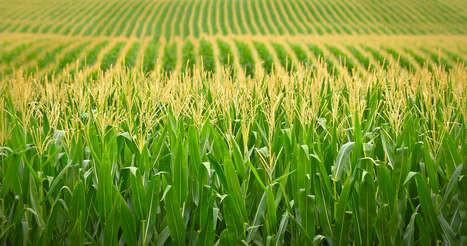 Green Energy - Energy Crops