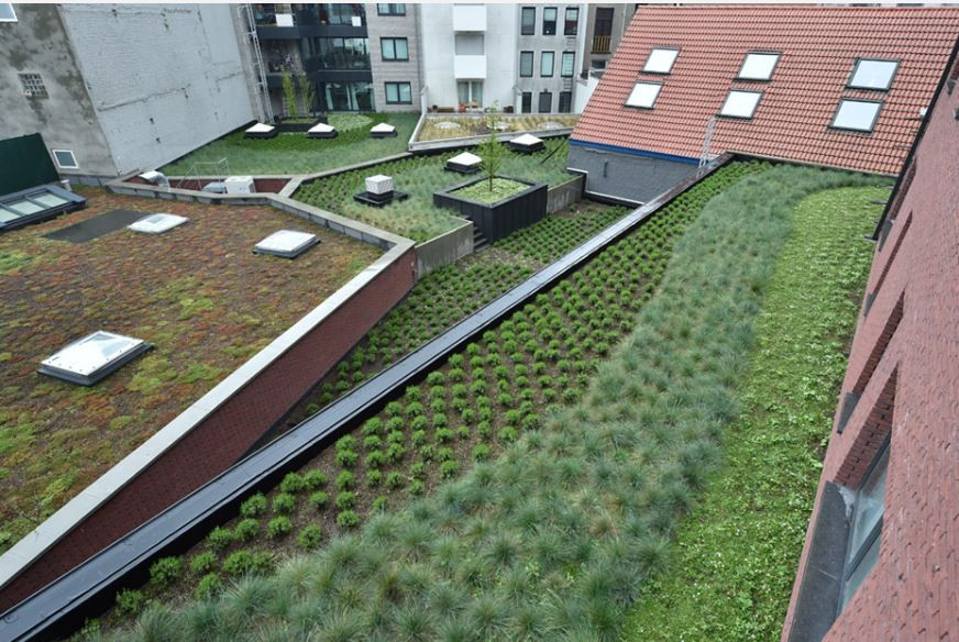 Green Roof by De Boer