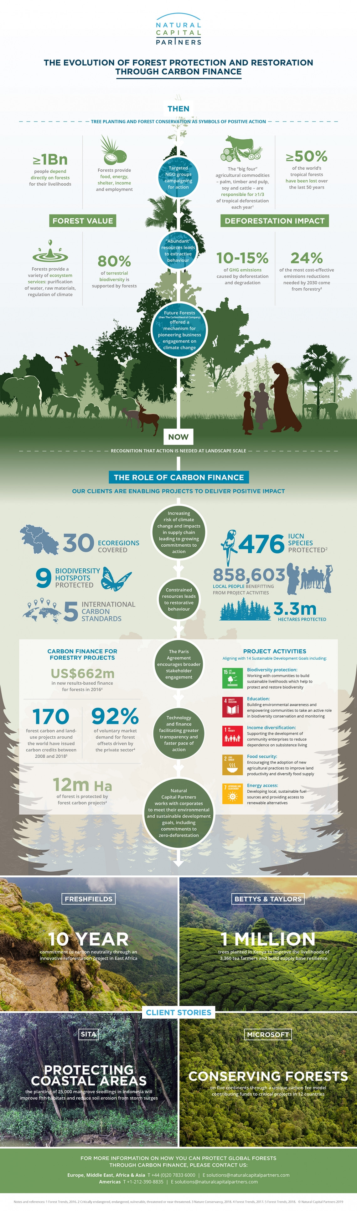 How can a business support global forests?