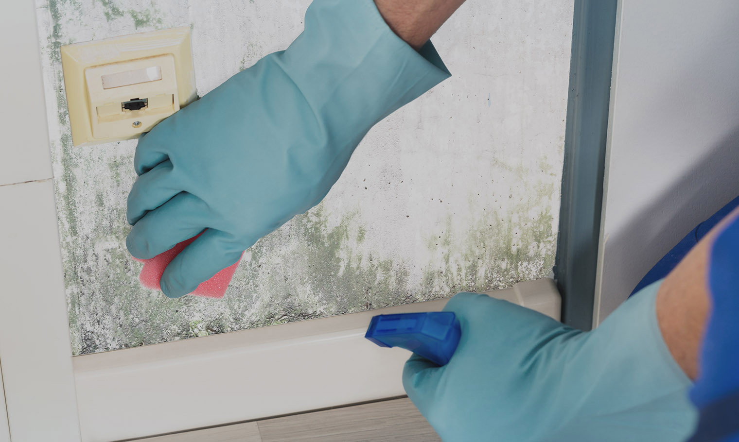 Mould Cleaning and Mildew Remediation