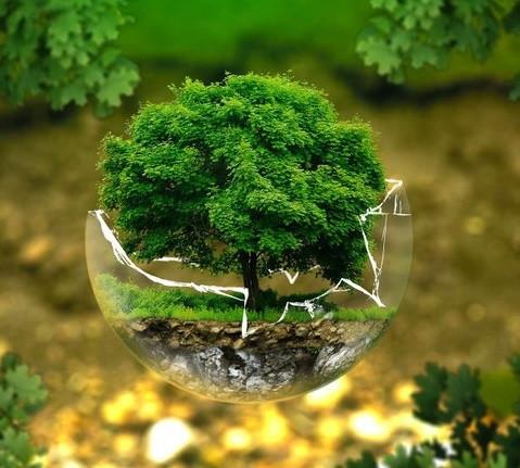 Ecobuilding / Planning Application : Environmental Report