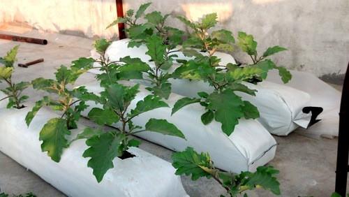 Plant Coir Grow Bags