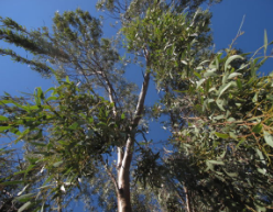 Protecting Native Forests