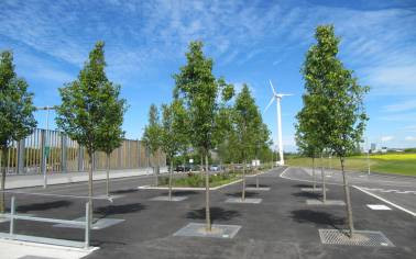Urban Tree Protection & Tree Surrounds