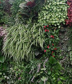 Vertical Plantscapes - Living Walls Design