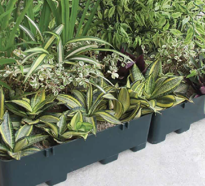 PlanterCell® 130 - Green roof modular tray system