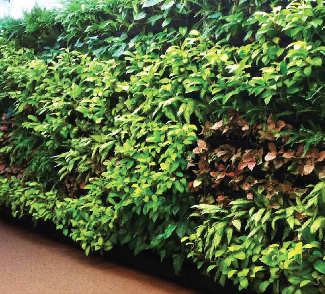 PlanterCell® 170 - Planter box to build green walls