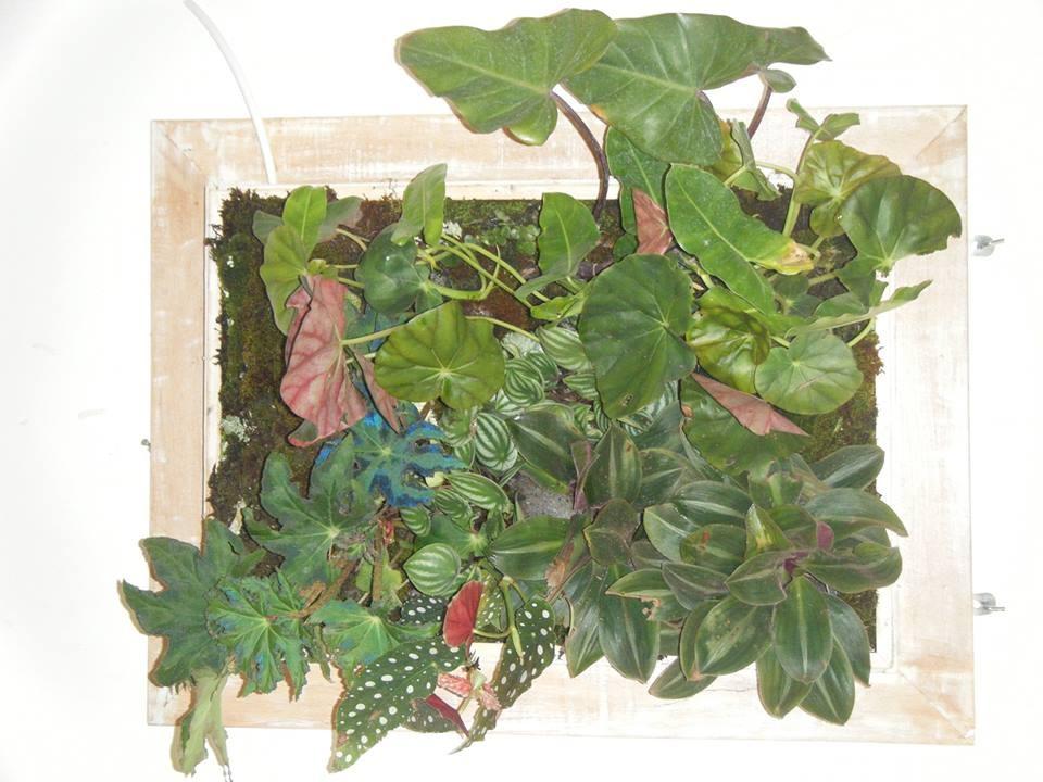 vertical garden kit \