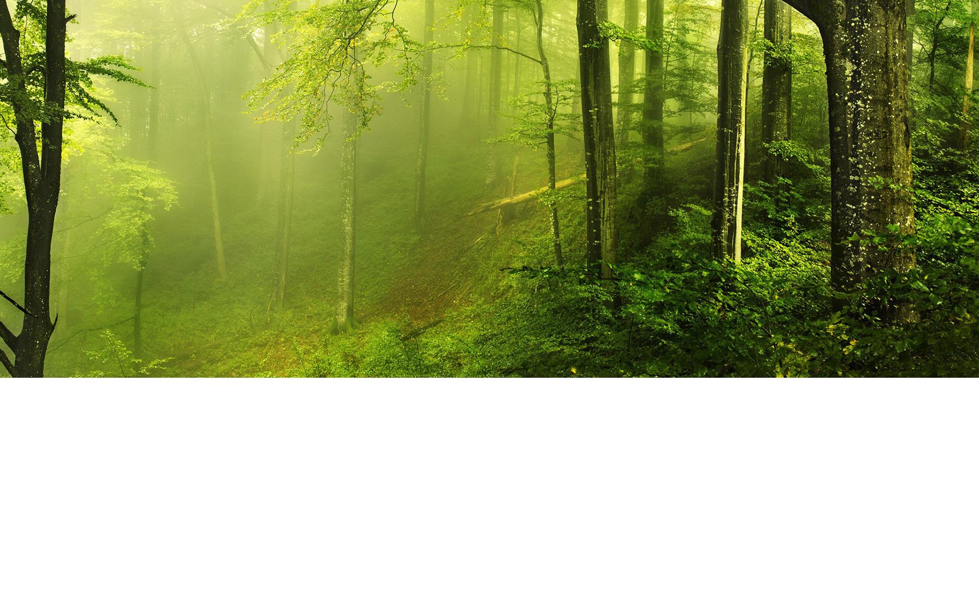 Forest Stewardship Council Fsc Zureli