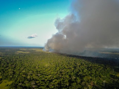 Savanna fires pump Central African forests full of nitrogen