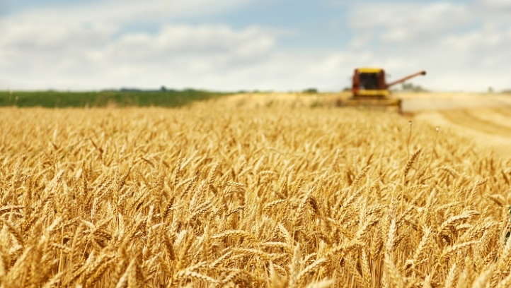 Olam unveils new 'net-positive' supply chain policy