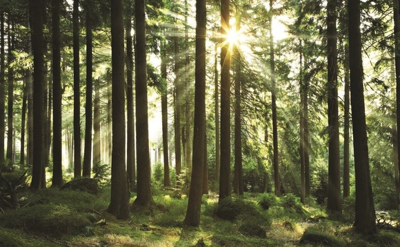 Investment drive sees Smurfit Kappa reach carbon goal three years early