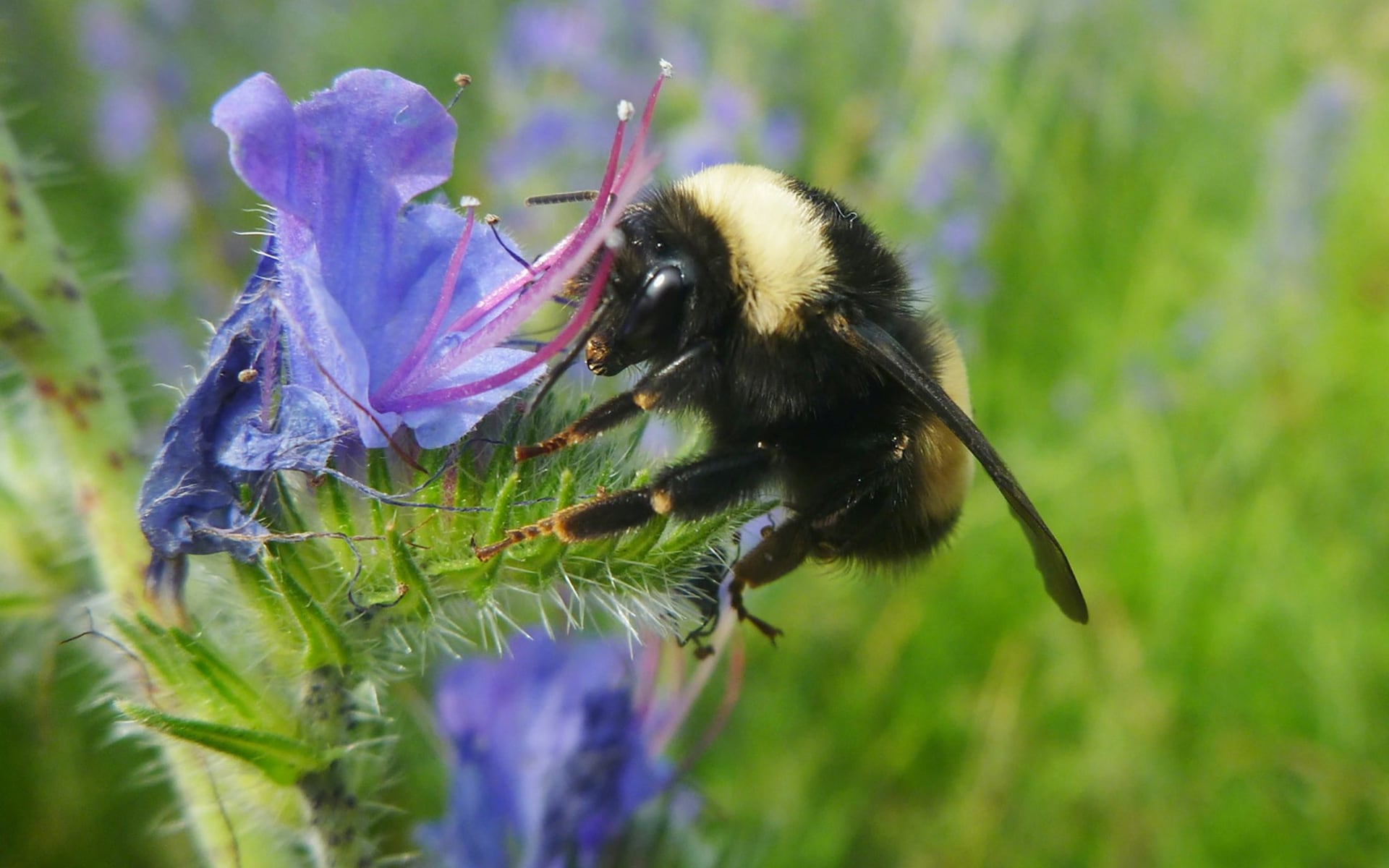 France becomes first country in Europe to ban all five pesticides killing bees