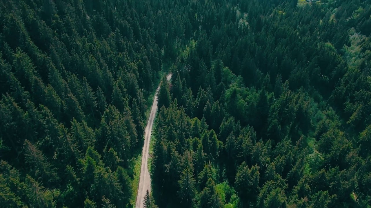 6 People Making the Planet Green Again by Planting Trees