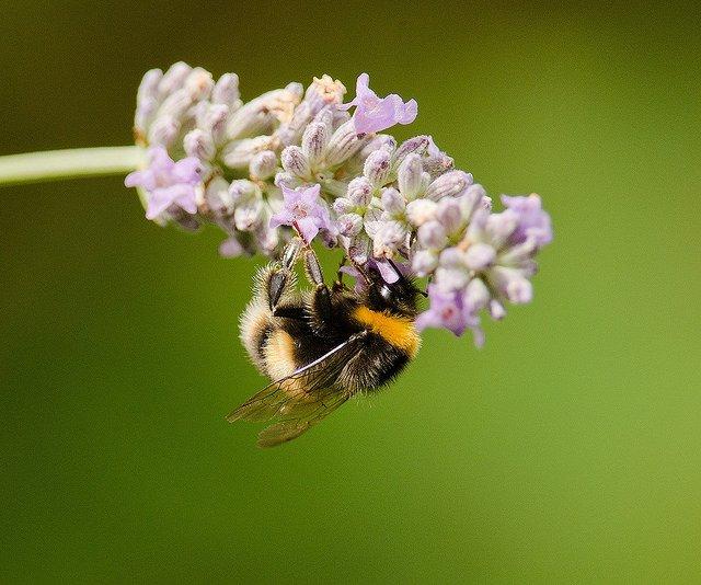 The hidden health benefits of bee stings