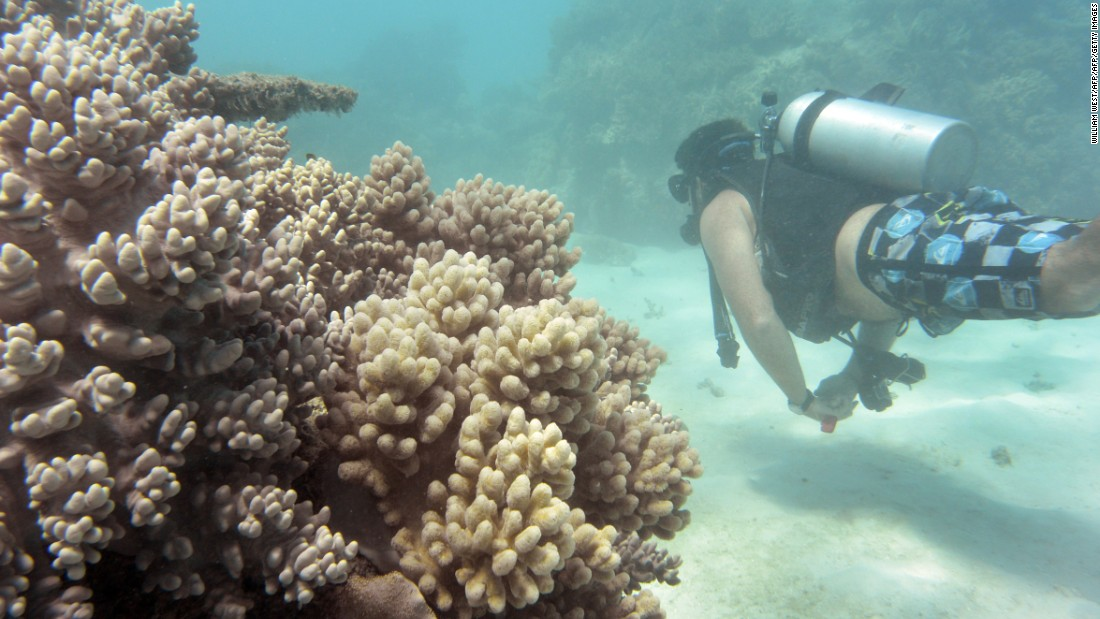 'Coral IVF' Treatment May Save Australia's Great Barrier Reef