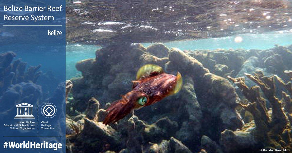 Belize Praised for Saving Its Huge Coral Reef From Utter Destruction