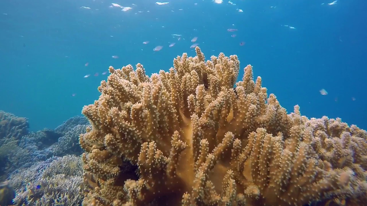 Indonesian Coral May Be Resistant to Global Warming, Scientists Say
