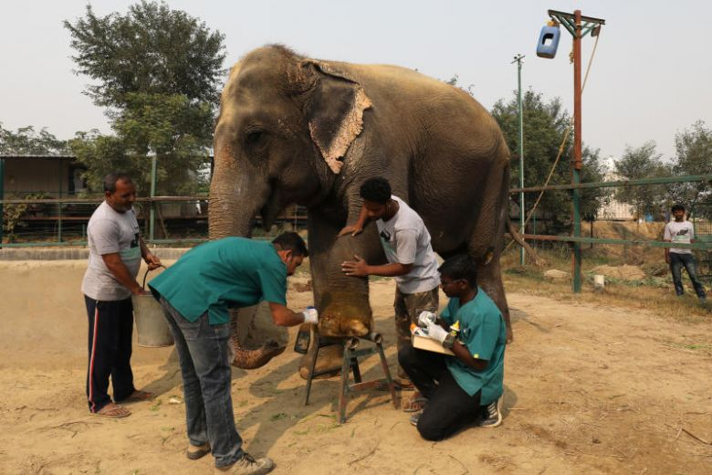 India Just Opened Its First Elephant Hospital — and the Pictures Are Amazing