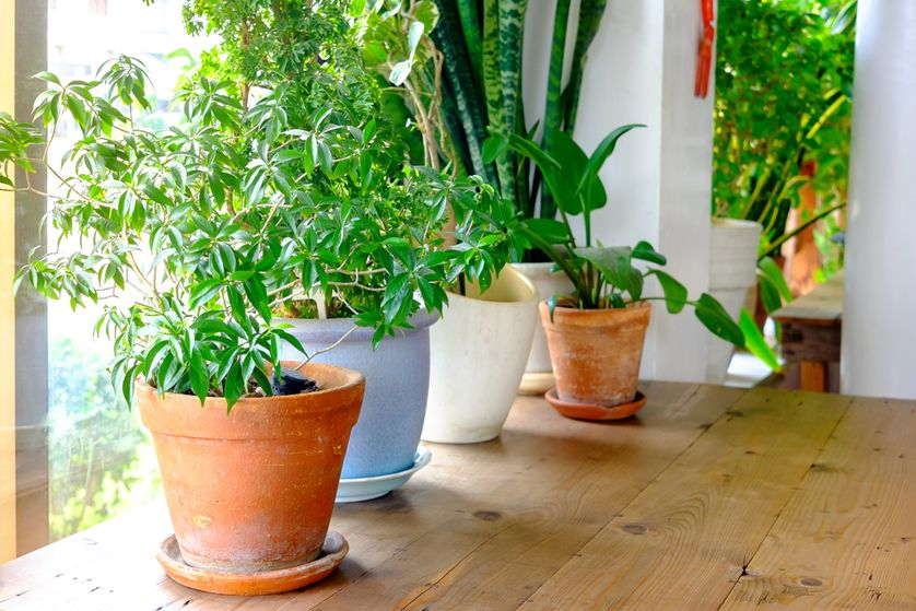 New houseplant can clean your home's air