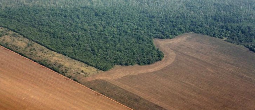 The Amazon is approaching a point of no return – but it's not too late
