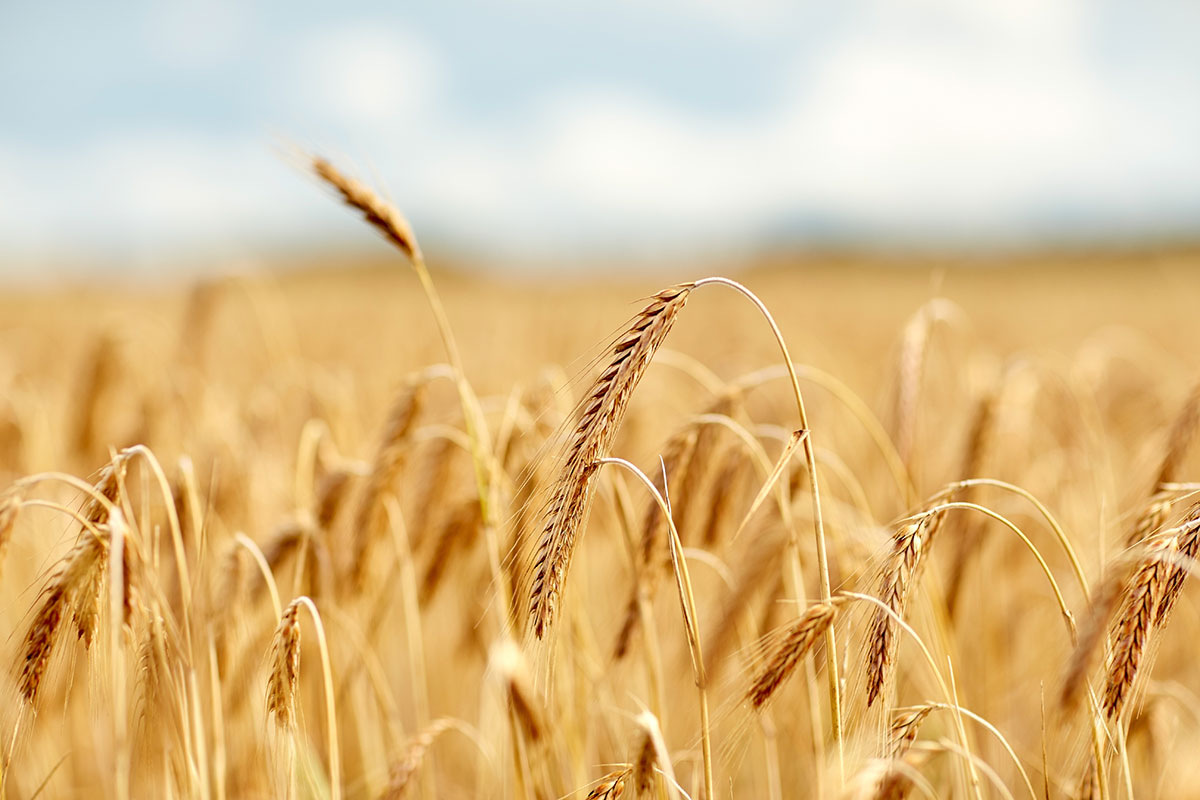 Traceability programs support bakers' environmental initiatives