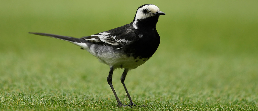 How Britain's backyard bird feeders are shaping evolution