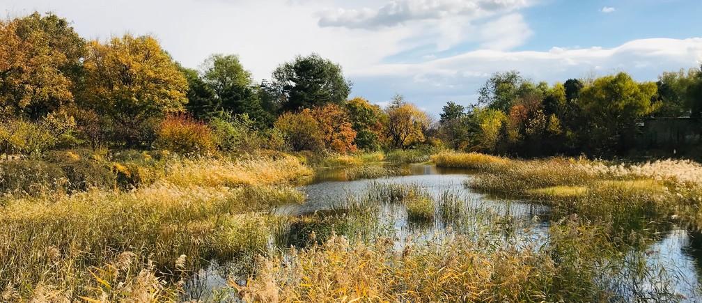 Why we need wetlands