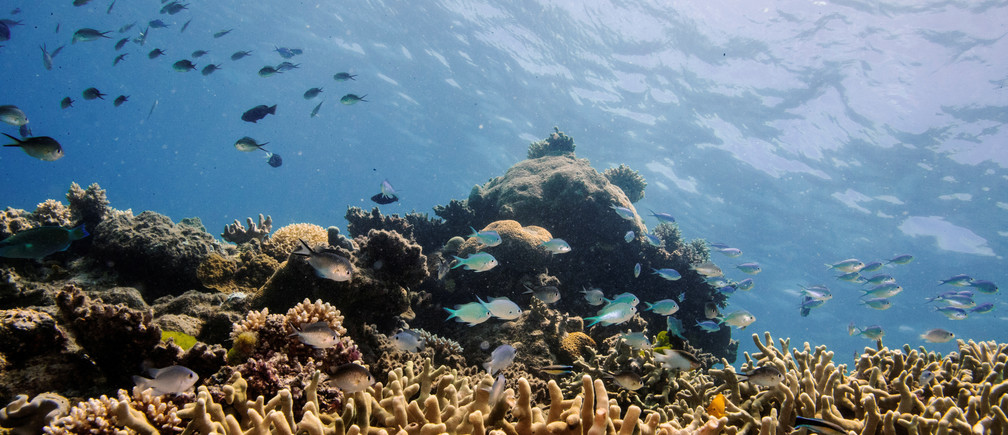 5 reasons why CEOs must care about safeguarding nature
