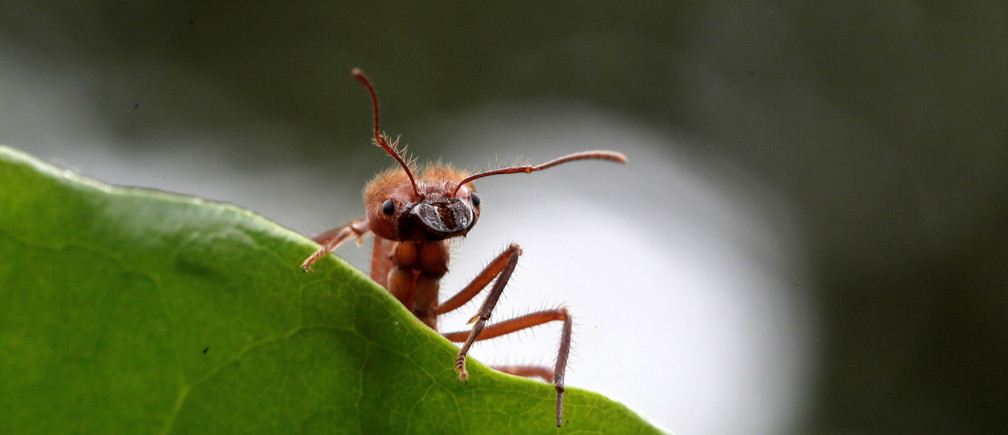 Insects are declining rapidly – here's why that needs to change
