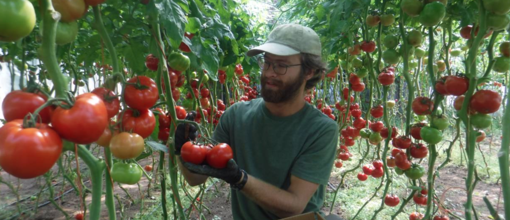 These farmers are prospering in the pandemic by delivering straight to homes