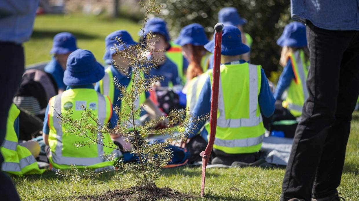 100,000th native tree planted in mini forest scheme in Canterbury