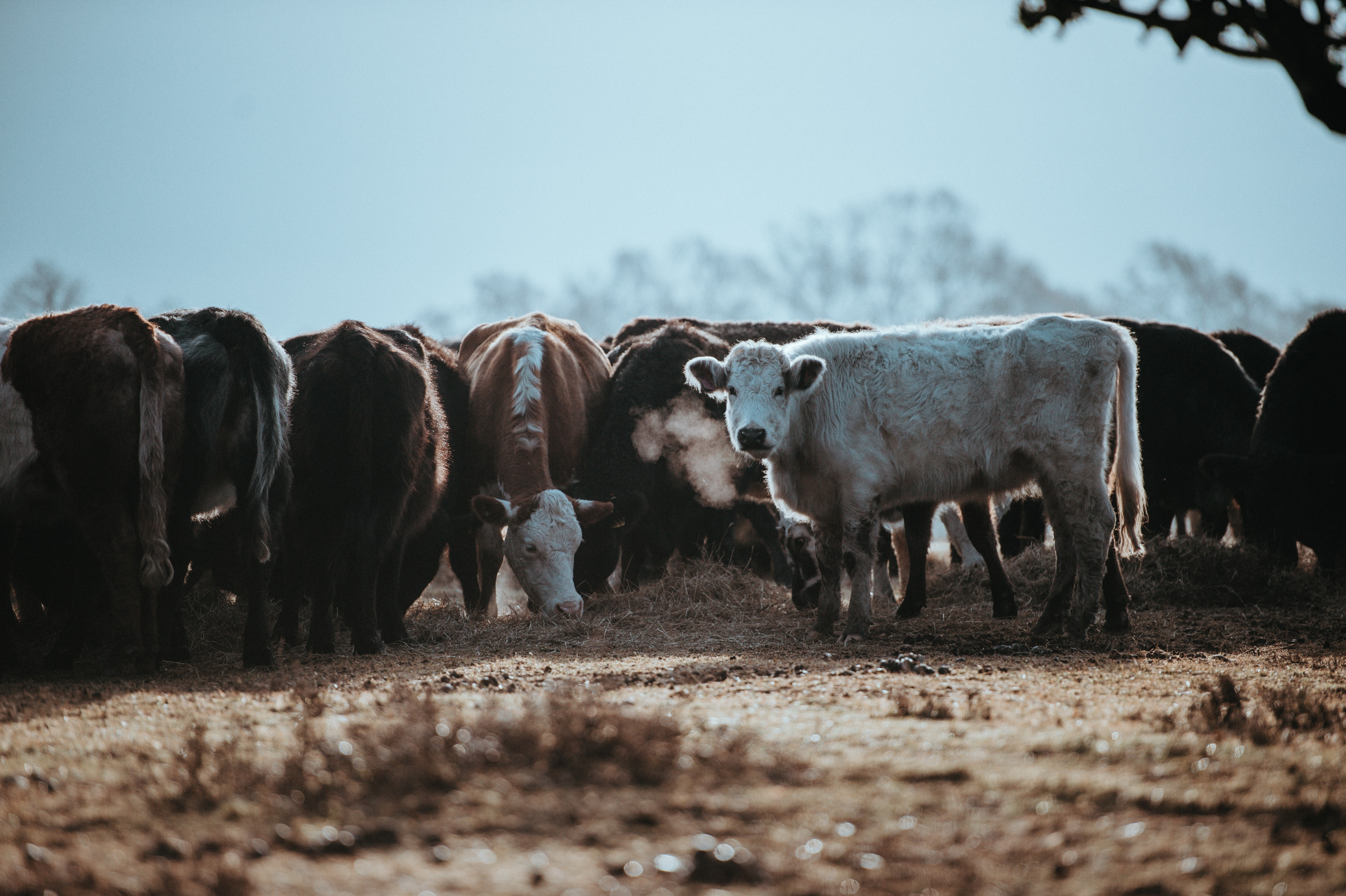 Forging a more sustainable path for animal farming