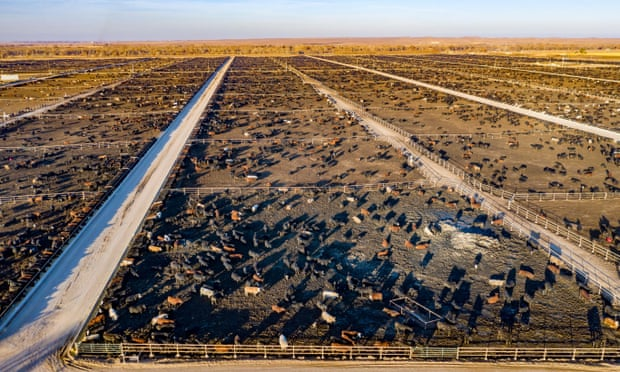 Cutting methane emissions is quickest way to slow global heating – UN report