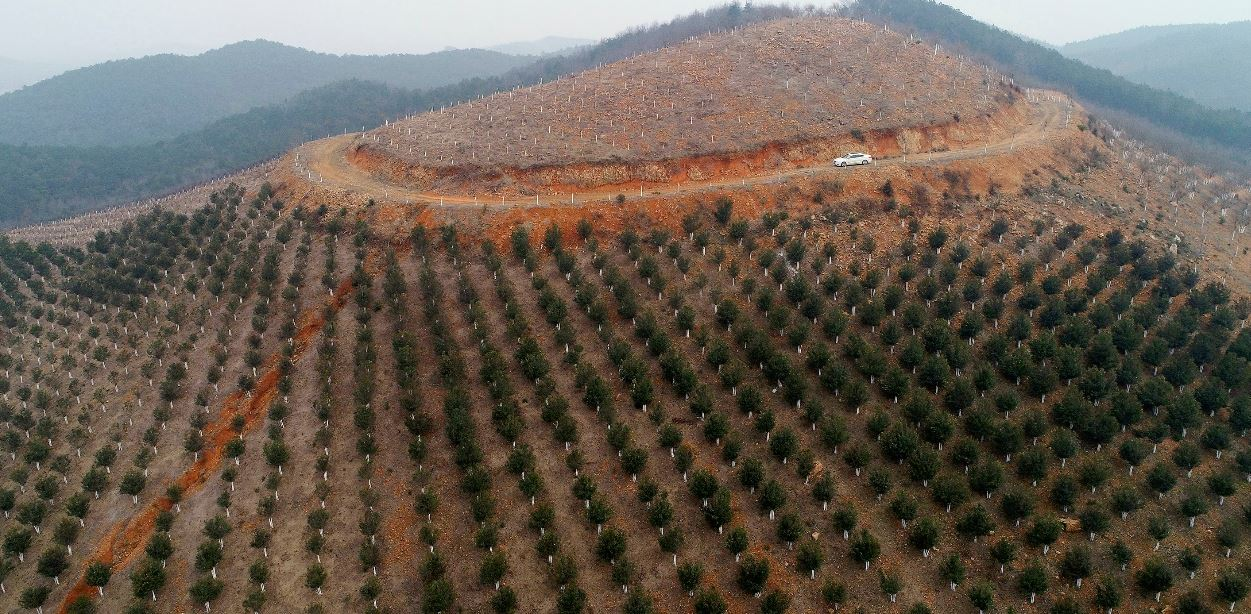 China to step up tree-planting campaign to help reach net zero emissions