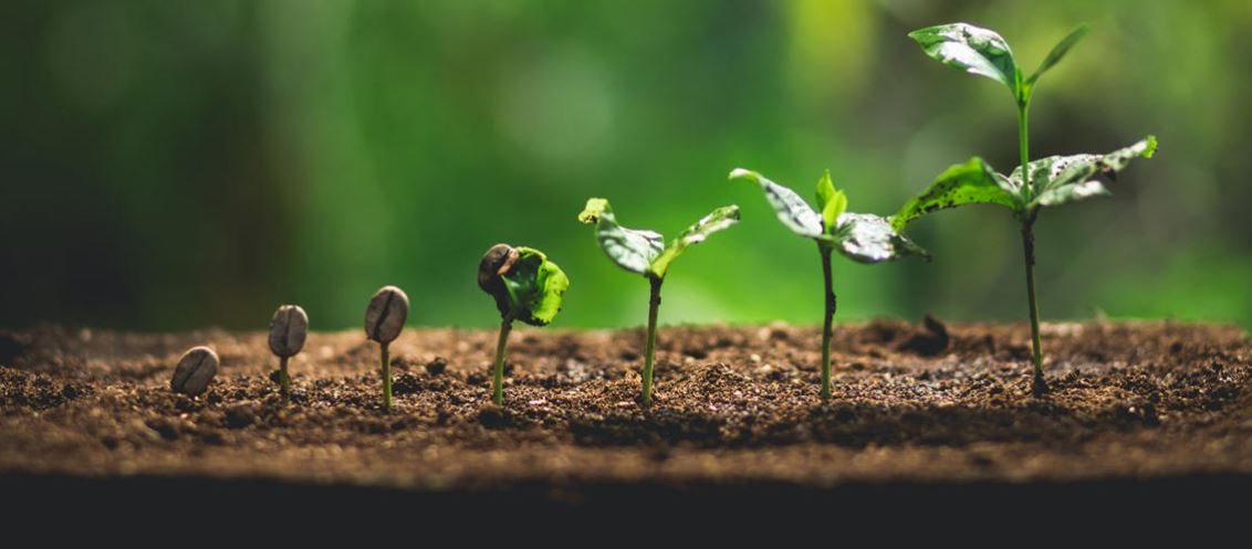 Sustainability most 'powerful opportunity' for profitable innovation in 2021